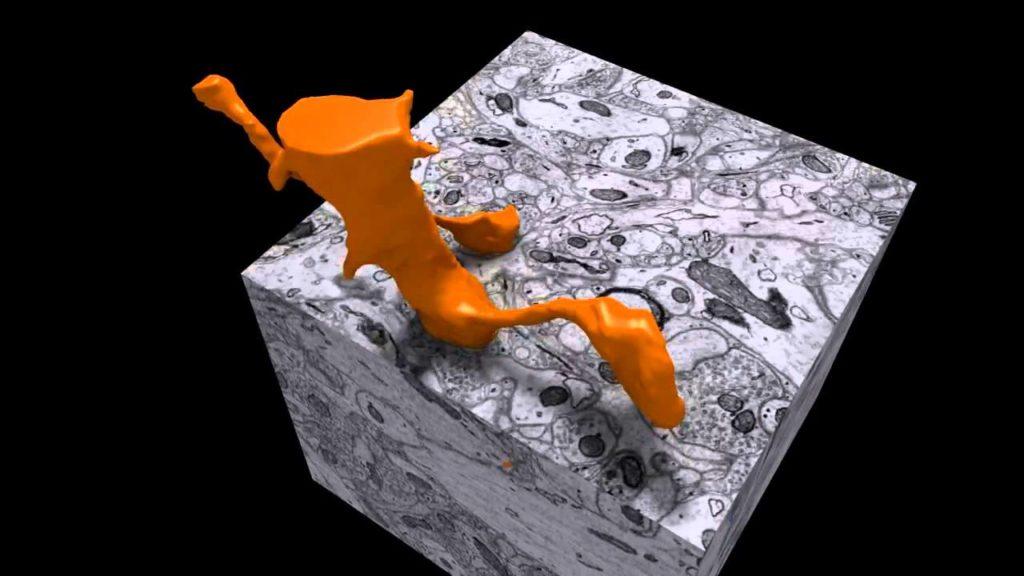 تتبع العصبونات في بيئة ثلاثية الأبعاد