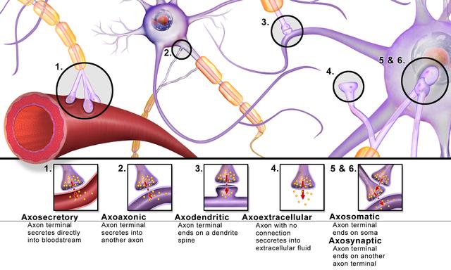 أنواع التشابكات العصبية