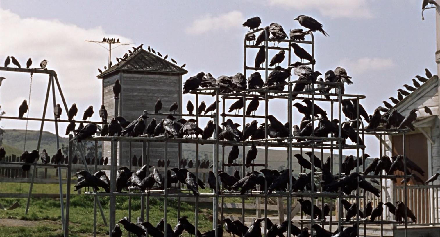 هيتشكوك - الطيور