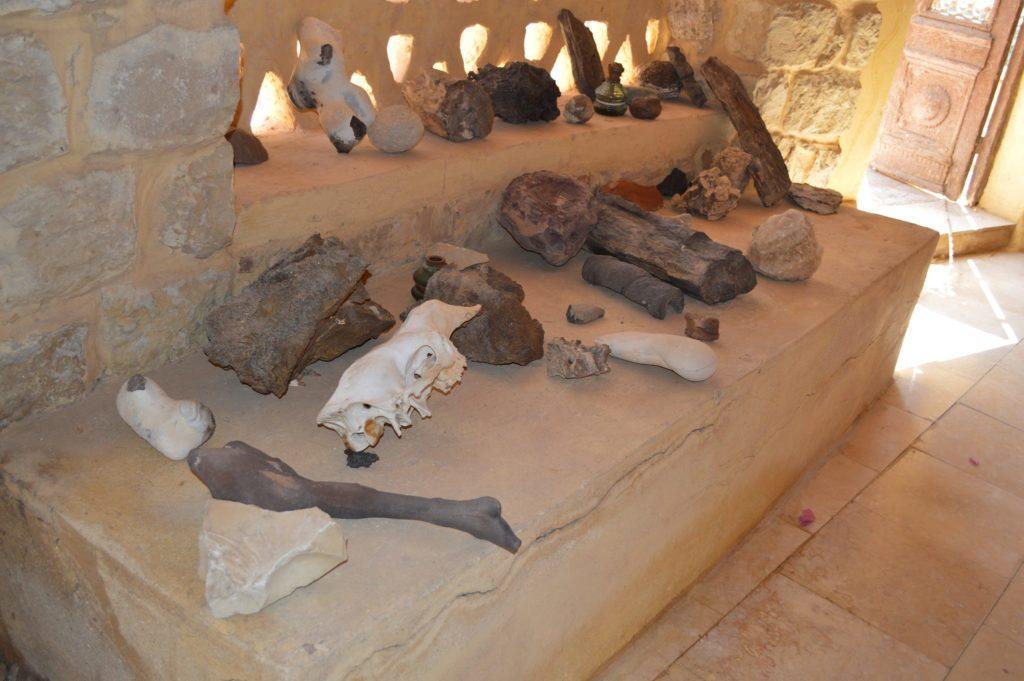 ديناصورات مصر الغابرة
