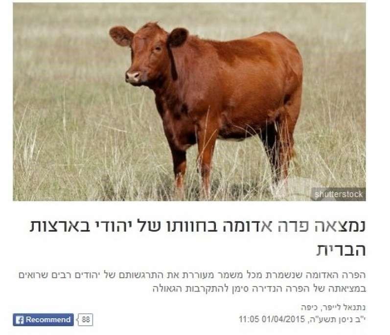 البقرة الحمراء المقدسة ميلودي