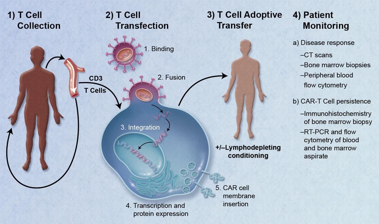 المناعة، كارتي، CAR-T، العلاج المناعي للسرطان، السرطان، المناعة