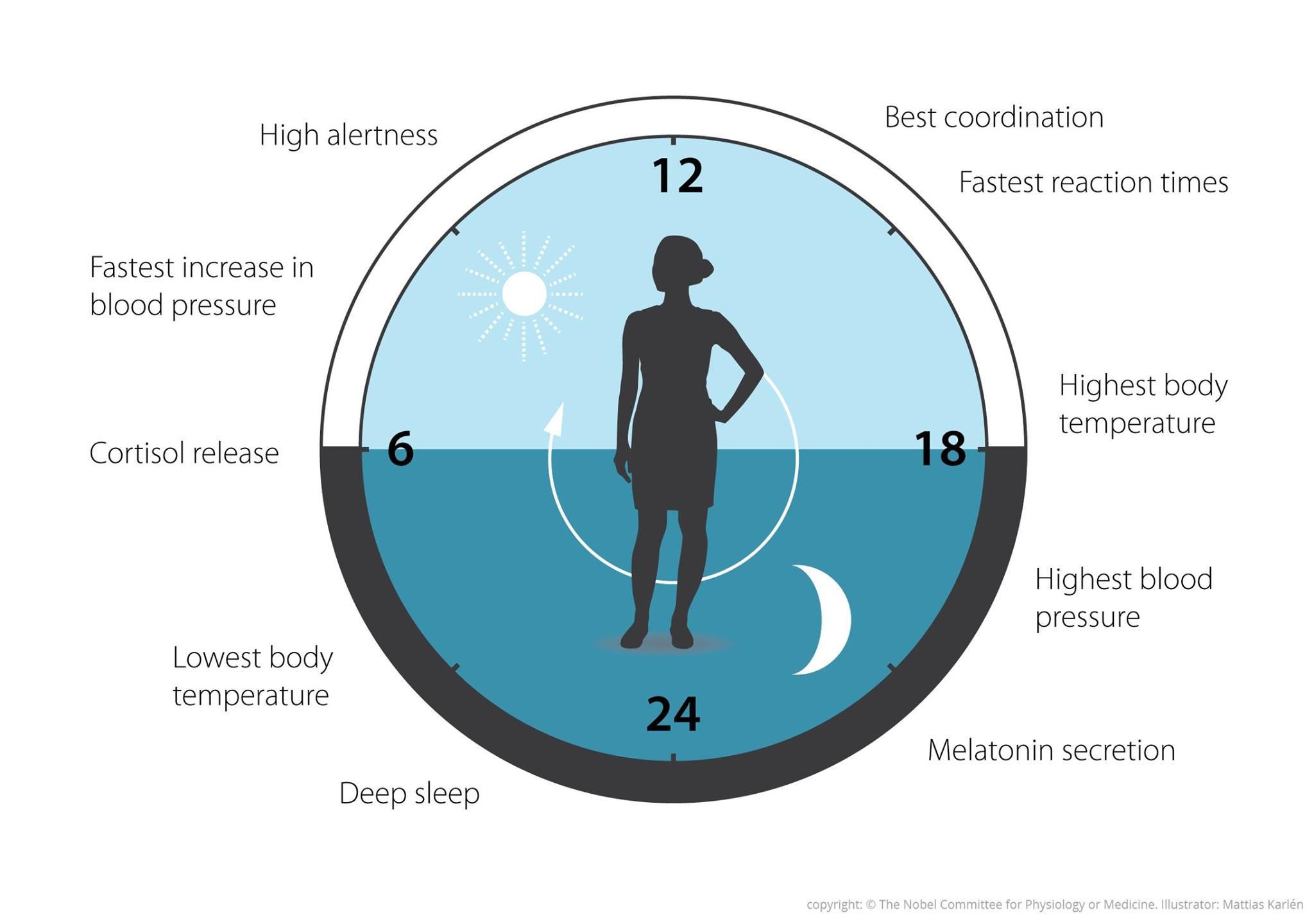 الساعة البيولوجية، نوبل، طب، صحة، نوبل في الطب، جائزة نوبل