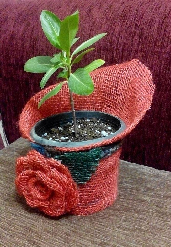 شمس الدين, نباتات, العمل الحر