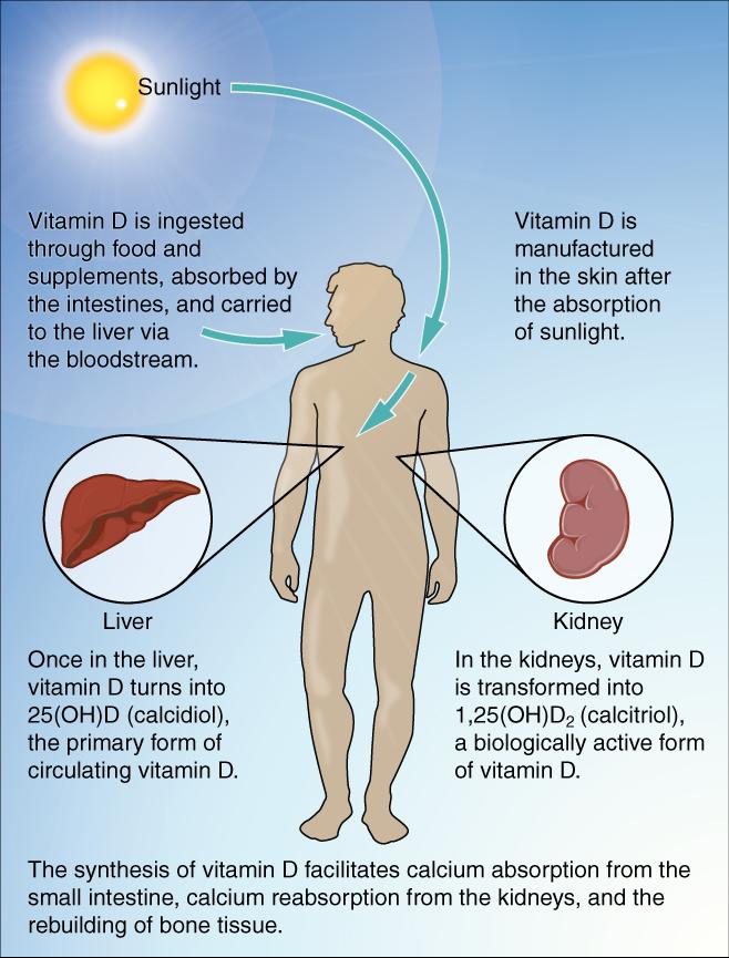 فيتامين د, فيتامين دال, الاكتئاب, الكساح, لين العظام, هشاشة العظام.