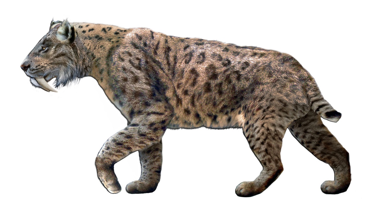 تطور, ثديات, بيولوجي, انقراض, سنوريات, حيوانات منقرضة