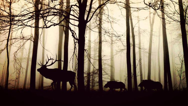 التنوع البيولوجي، تنوع بيولوجي