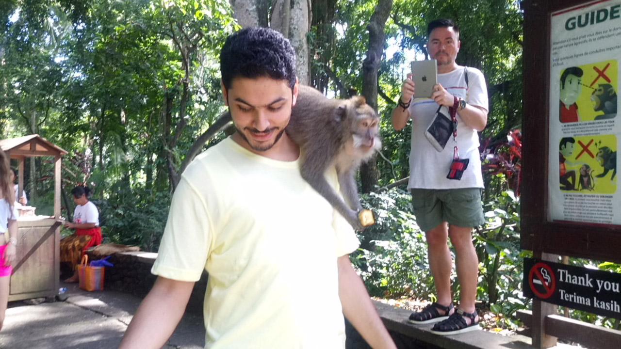 غابة القردة في جزيرة بالي في إندونسيا