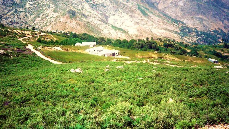 حقول القنب في الريف بالمغرب