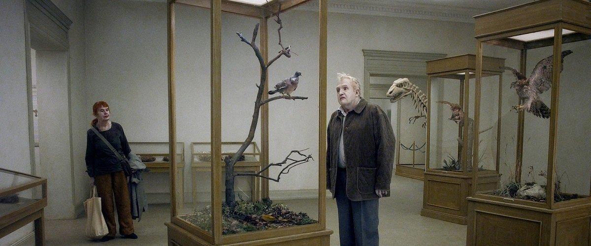 حمامة, روي أندرسون, فن تشكيلي