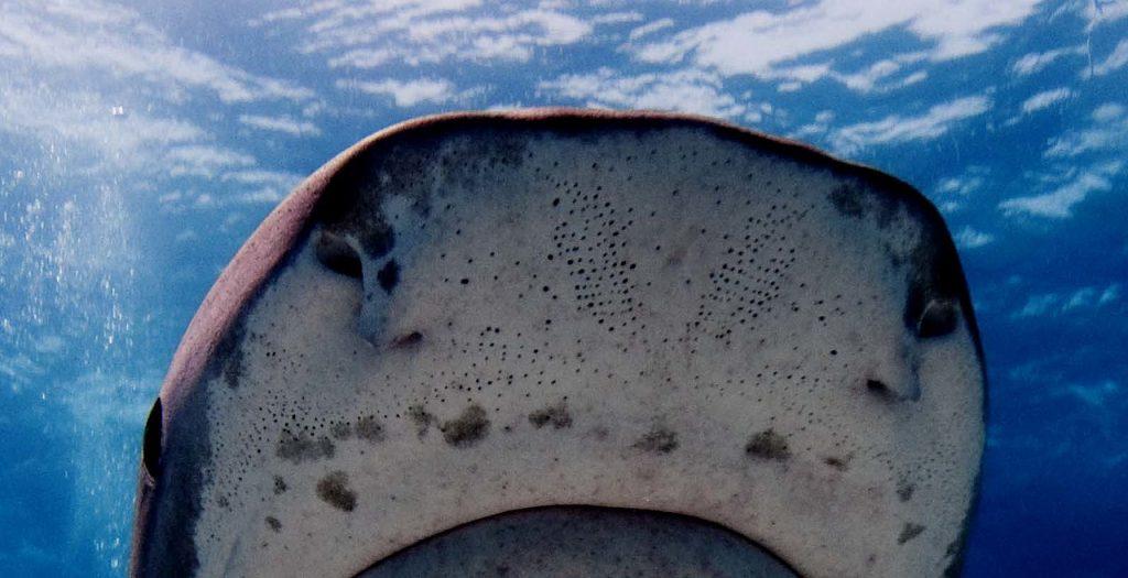 سمك القرش حوادث سمك القرش