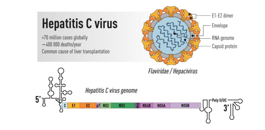 فيروس سي